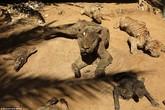 Động vật hóa xác ướp ở vườn thú dải Gaza