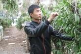 Anh nông dân trẻ thu tiền tỷ mỗi năm nhờ bén duyên hoa lan
