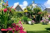Vườn đẹp như tiên cảnh của mẹ Việt ở làng hoa nổi tiếng thế giới
