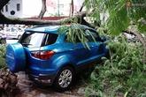 Hà Nội: Cây xanh bất ngờ đổ sập, đè vào xe ô tô đang đỗ ven đường