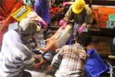 Bắt được đàn cá hiếm gặp, ngư dân thu về gần 700 triệu