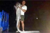Bắt được cá lạ dài 3m sau động đất tại Đài Loan
