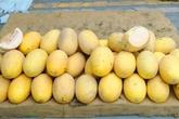 11.000 tấn dưa vàng Trung Quốc: Dân Việt tráng miệng hết vèo