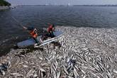 Đã tìm ra nguyên nhân cá chết hàng loạt ở các hồ Hà Nội
