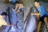 Chi gần nửa tỷ rước 'nàng tiên cá' từ Biển Hồ về Sài Gòn