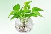 12 con giáp nên trồng cây gì để thu hút tiền tài?