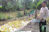 Sống đạm bạc giữa cánh đồng, nuôi vịt lấy tiền xây hàng chục căn nhà và cầu từ thiện