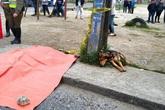 Chú chó nằm bên chủ qua đời vì tai nạn khiến hàng triệu người bật khóc