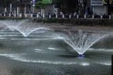 Hàng chục tấn cá chết được vớt sạch trong đêm, hồ Hoàng Cầu trở nên trong sạch