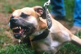Ở Anh, chó cắn chết người chủ đi tù 14 năm