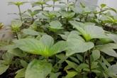 Những sai lầm cần nắm vững khi bắt đầu trồng rau thùng xốp