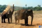 Trại trẻ mồ côi lớn nhất thế giới chỉ dành riêng cho loài voi