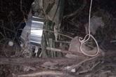 Mẹ chồng hốt hoảng phát thi thể con dâu treo trên cành cây