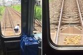 Người lái tàu dừng cả chuyến tàu để nhặt khoai rơi cho bà lão