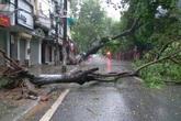 """Bão số 1: Danh sách các tuyến phố Hà Nội đang bị """"phong toả"""" vì cây đổ"""