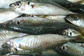 Kiểm tra kỹ lại nồng độ phenol trong cá nục tại Quảng Trị