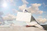 Không la bàn định vị, sao chim bồ câu lại có thể đưa thư chính xác đến nơi cần đến?