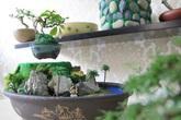 Bonsai tiền triệu bay lơ lửng hút khách