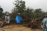 Dân làng bưởi đặc sản Phúc Trạch điêu đứng sau cơn lũ kinh hoàng