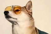 """Chị em phát sốt với loạt hình """"ăn chơi"""" của chú chó sành điệu số 1"""