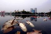 Hà Nội: Chuyên gia lý giải nguyên nhân 5 tấn cá chết ở hồ Hoàng Cầu