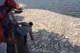 Vụ cá Hồ Tây chết hàng loạt: Xác định có 24 cửa xả xuống hồ