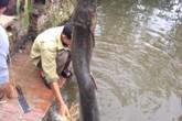 """Hải Dương: Người dân bắt được """"cá lạ"""" giống cá sấu"""