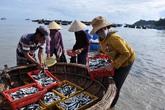 Bộ Y tế công bố những loại hải sản an toàn ở 4 tỉnh miền Trung