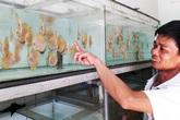 Dân chơi cá cảnh trên thị trường Việt Nam tăng mạnh