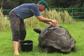 Con vật già nhất thế giới được tắm rửa lần đầu tiên trong đời