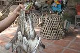 Tận diệt chim trời kiếm tiền triệu mỗi ngày