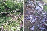 Thái Lan: Cây cổ thụ bật rễ, 52 con khỉ chết lăn lóc khi đang say ngủ