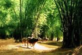 Thâm cung bí sử (86 - 1): Chuyện người làng tôi