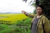 """Chuyện lạ ở Quảng Bình: Xuất hiện côn đồ đòi """"bảo kê mùa gặt""""?!"""