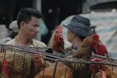 """""""Mối họa"""" khi mở cửa cho gia cầm Trung Quốc tràn vào thị trường"""