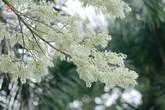 Những loài hoa tháng 3 đẹp đến nao lòng