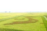 Độc đáo bản đồ Việt Nam được tạo nên bằng các giống lúa mới