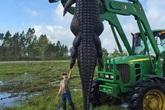 Bắt được cá sấu khổng lồ dài 4m gây choáng