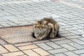 Mèo bị bỏ rơi vẫn ngồi đợi chủ suốt một năm trời