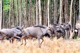 Hội thảo bảo tồn loài nguy cấp trong sách đỏ thế giới