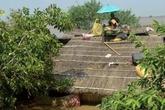 Lũ lụt khủng khiếp: 300 người chết, 6 triệu người bị ảnh hưởng