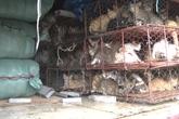 Đà Nẵng: Phát hiện hơn 200 con mèo không rõ nguồn gốc tuồn ra Bắc