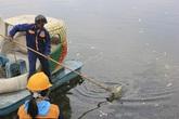 Hi hữu ở Hà Nội: Bao cao su nổi trắng góc hồ Linh Đàm