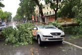 Hà Nội: Một người chết, 5 bị thương do bão Mirinae