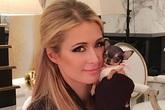 Paris Hilton bỏ 8.000 USD mua cún cưng bé bằng tách trà