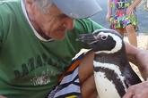 Chim cánh cụt mỗi năm vượt 8.000 km về thăm ân nhân