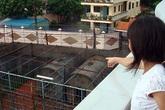 Hổ cắn chết nhân viên chăm sóc ở Bình Dương