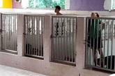 Phẫn nộ cảnh trẻ em khuyết tật bị nhốt trong chuồng như vật nuôi