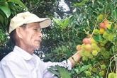 75 tuổi, cụ ông vẫn tự tay chăm bón vườn cây trái cho thu hoạch 300 triệu/năm