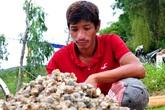 Người nuôi ốc hương, tôm hùm khóc ròng vì thiệt hại trăm tỷ do mưa lũ